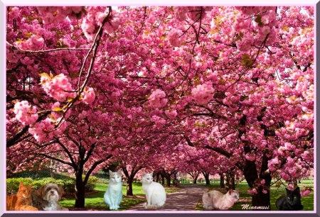 primavera-gf