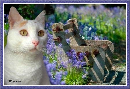 bka-banco-de-campo-rustico-entre-campanillas-de-flores-en-verano