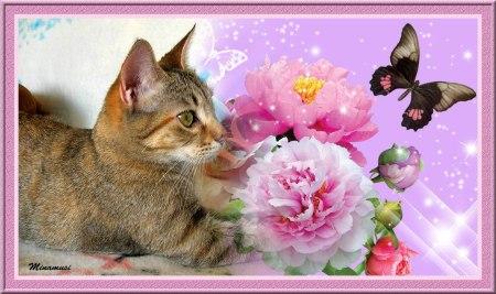 dunia-flores-rosas